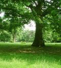 Stadtgarten - Foto: Horsch Willy - Lizenz: GNU-FDL / Zum Vergrößern auf das Bild klicken